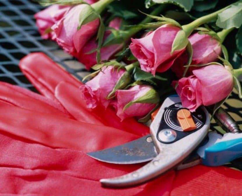 La poda de floración de rosales